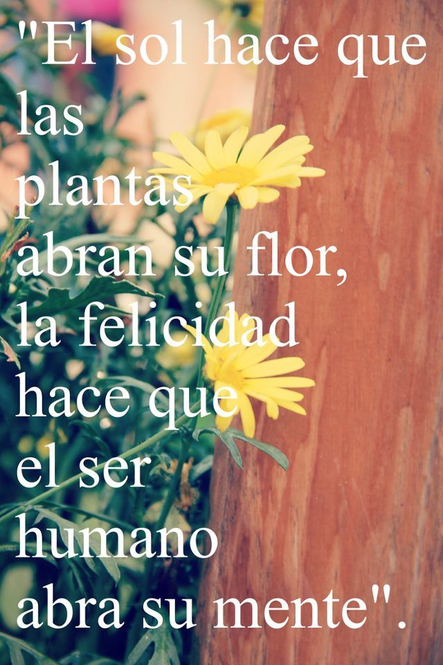 El sol hace que las plantas abran su flor, la felicidad hace que el ...