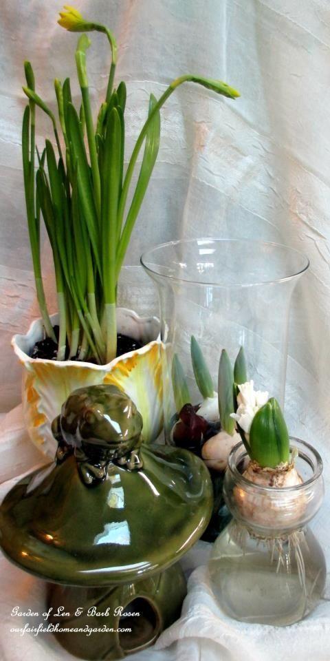 winter bulbs gardening winter