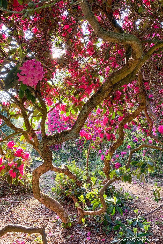 cb83453911d07e0b14b7d453f80f53ea - Best Gardens To Visit In Spring