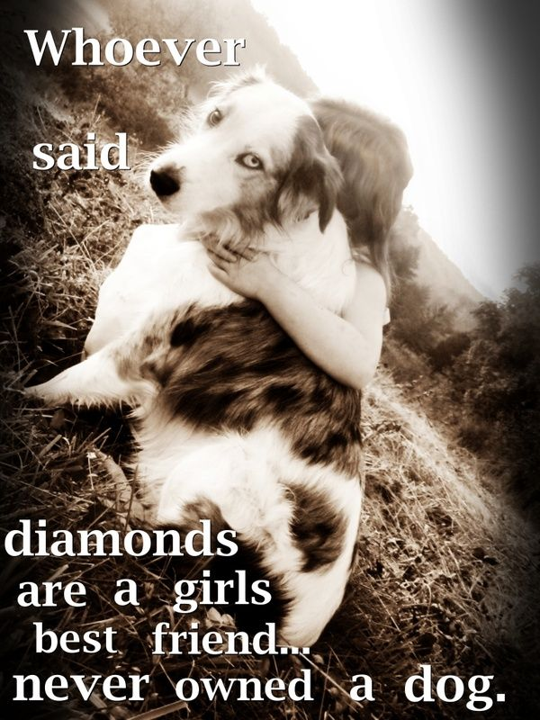 Dogs Are A Girls Best Friend Dog Quotes Dog Love Animals