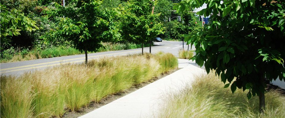 Landline design residential commercial melissa medeiros for Sustainable landscape design