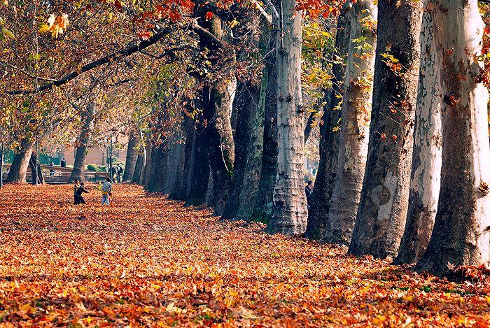 Autumn's play by Bojkovski.deviantart.com