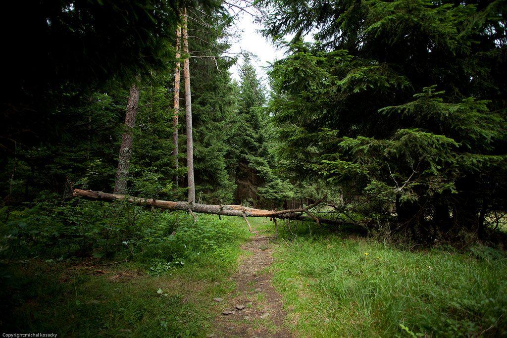 Urwälder Europa