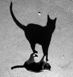 gif cat walking shadow - Buscar con Google