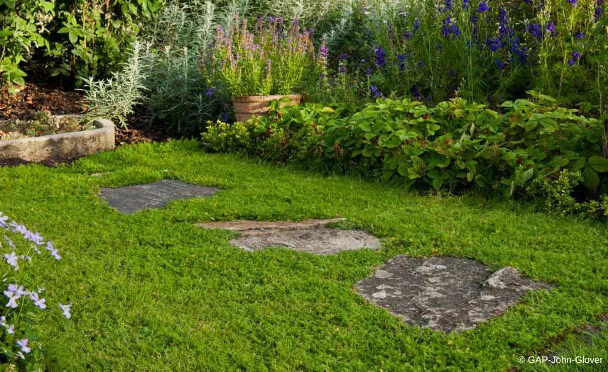 Alternatives au gazon 10 couvre sols pour remplacer la pelouse jardin chamomile lawn lawn - Jardin sans gazon ...
