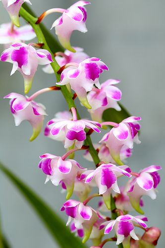 Orchid Amazing Flowers Beautiful Orchids Beautiful Flowers