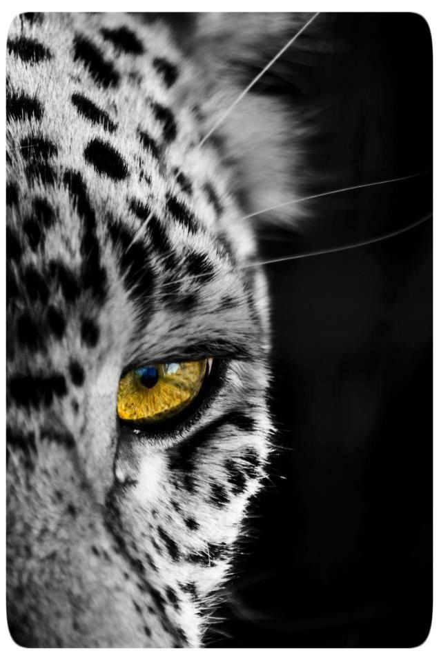 Pin by marianne de swardt on South African Wildlife | African wildlife, African, Wildlife
