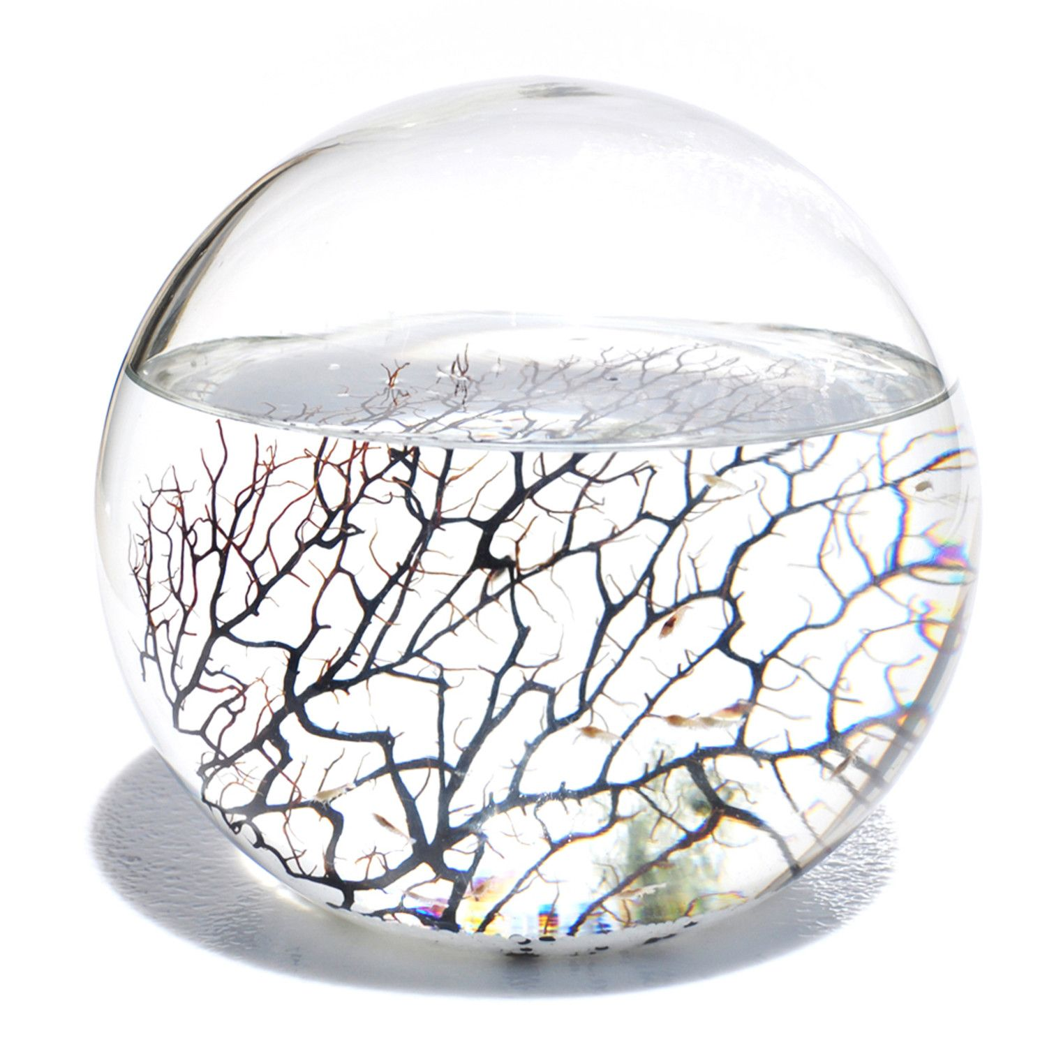 Within the EcoSphere globe are active micro-organisms, small shrimp, algae and bacteria, each existing in filtered sea water. Because the EcoSphere is a self-sustaining ecosystem, you never have to feed the life within. Because the living organisms within the EcoSphere utilize their resources without overpopulating or contaminating their environment, the EcoSphere requires virtually no maintenance.