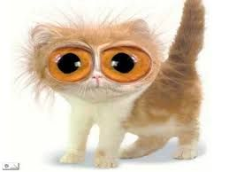 Resultado de imagem para gato de óculos