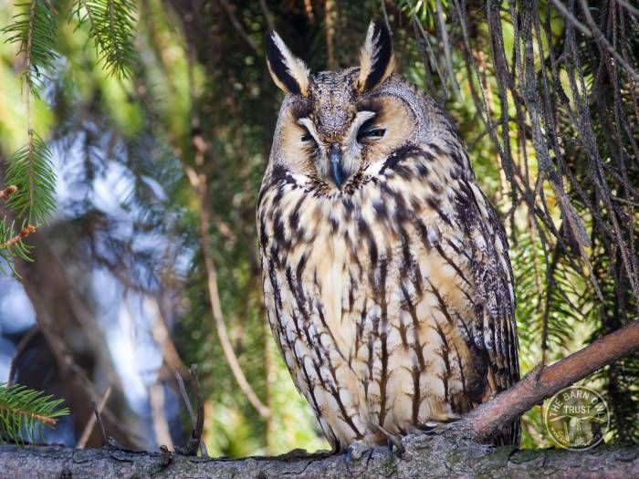 Owl identification - what owl was that | Owl, Owl facts ...
