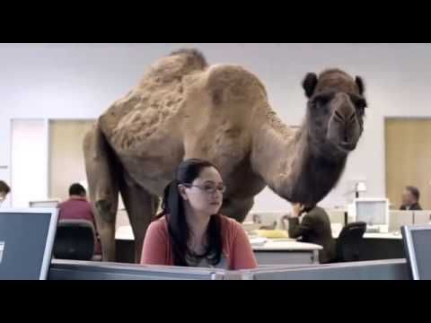 Geico Hump Day Remix Humpday Commericalsad Icons Pinterest