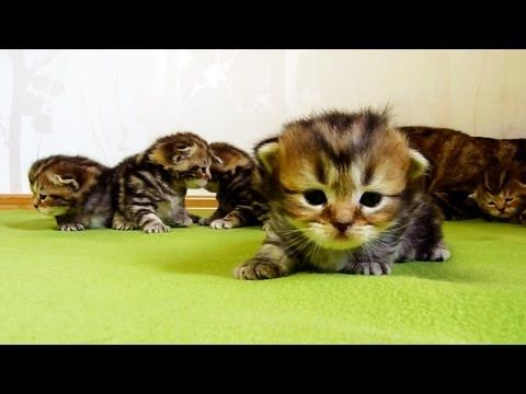 3 Week Old Kittens Learn How To Walk How Can You Not Just Go Awww Over This Kittens Cutest Cute Kitten Gif Cute Cats