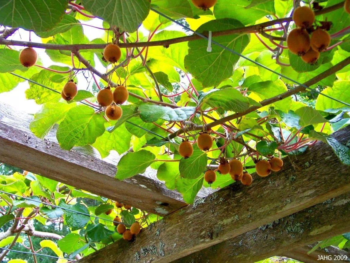 Abri De Jardin Kiwi Idees