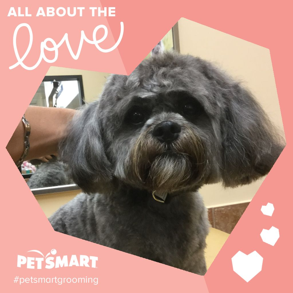 Inspiring Moments Are Meant To Be Shared Petsmart Grooming Petsmart Animal Photo