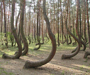 I love these trees. I can't imagine what traumatized them.