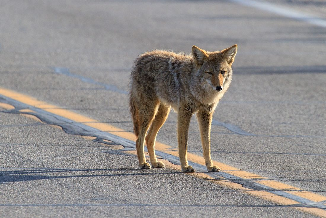 Wildlife Photography by James Marvin Phelps   Death valley ...