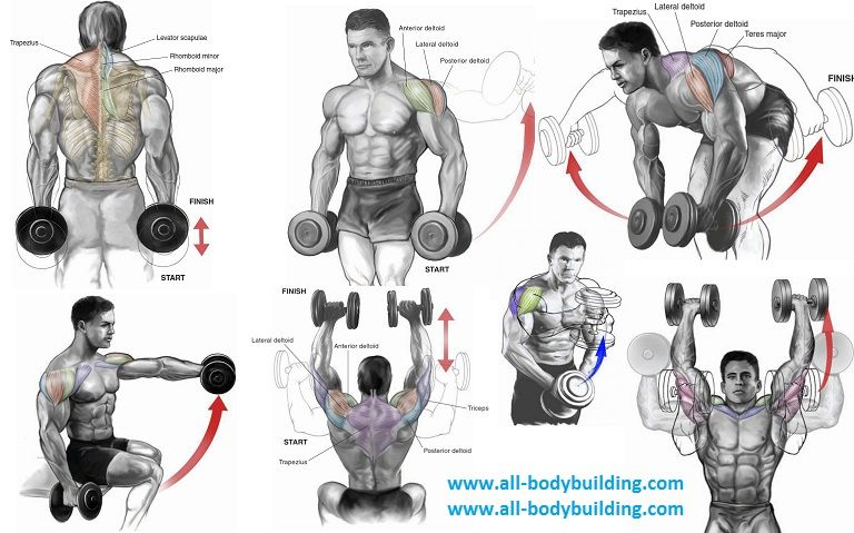 shoulder workouts at the gym | freesub4 com