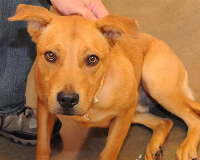 Adoptable pets from Arizona Humane Society and Maricopa