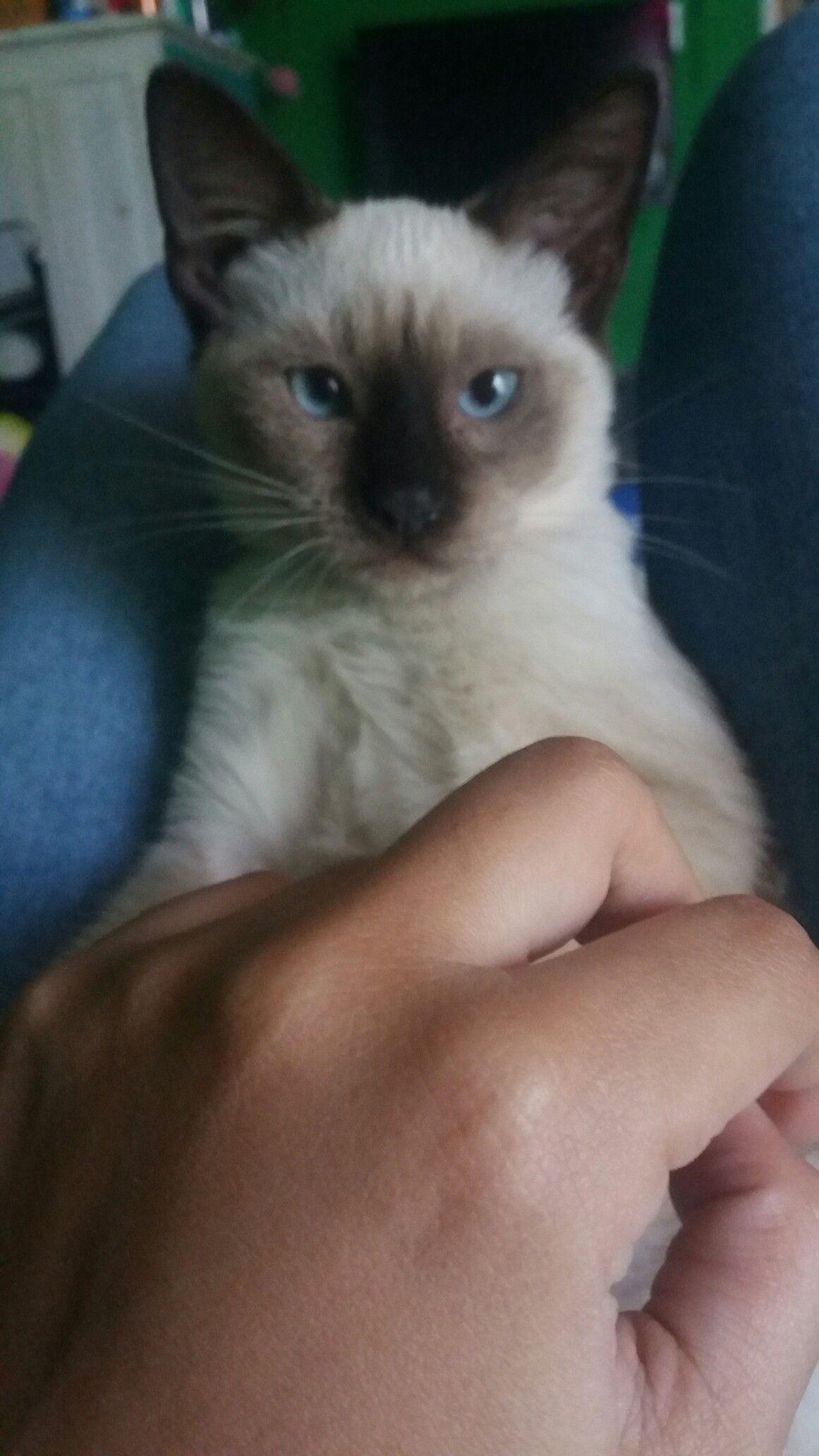 Pin by Eliany Luzcando on Gatos Animals, Cats