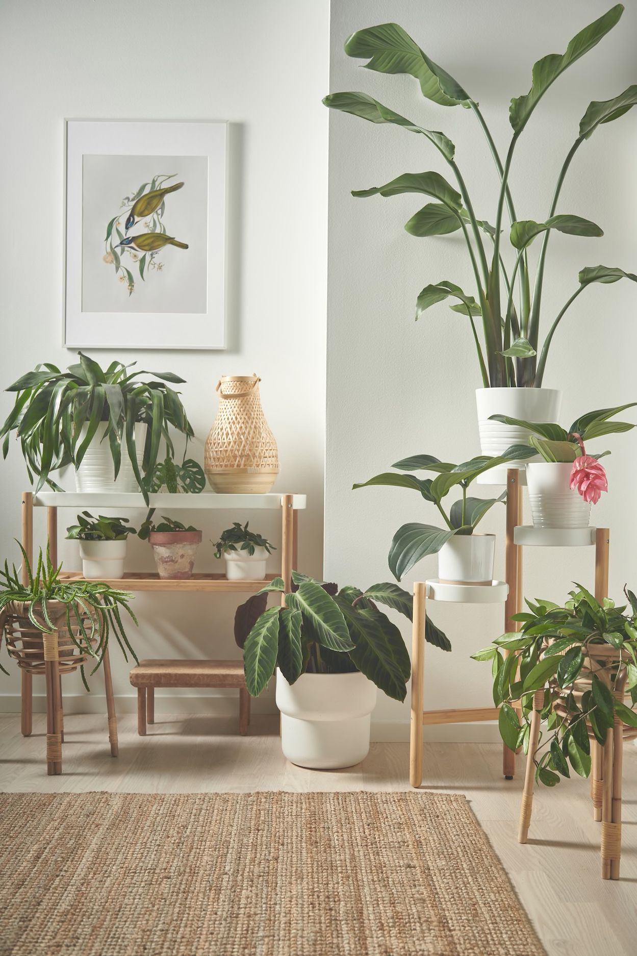 Geschickt ablenken mit Pflanzen