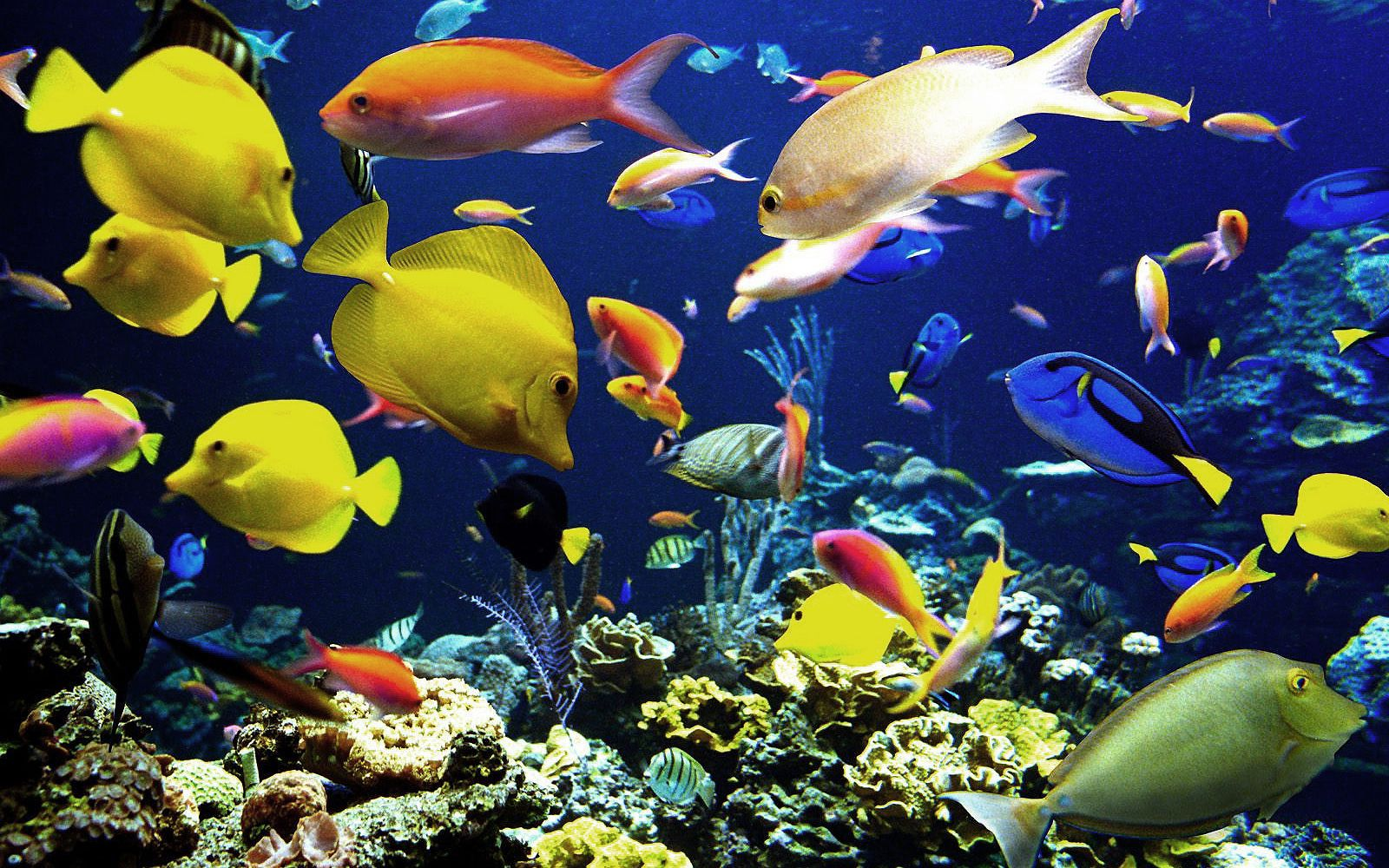 Hd vissen wallpaper met tropische vissen onder water for Wallpaper fish in water