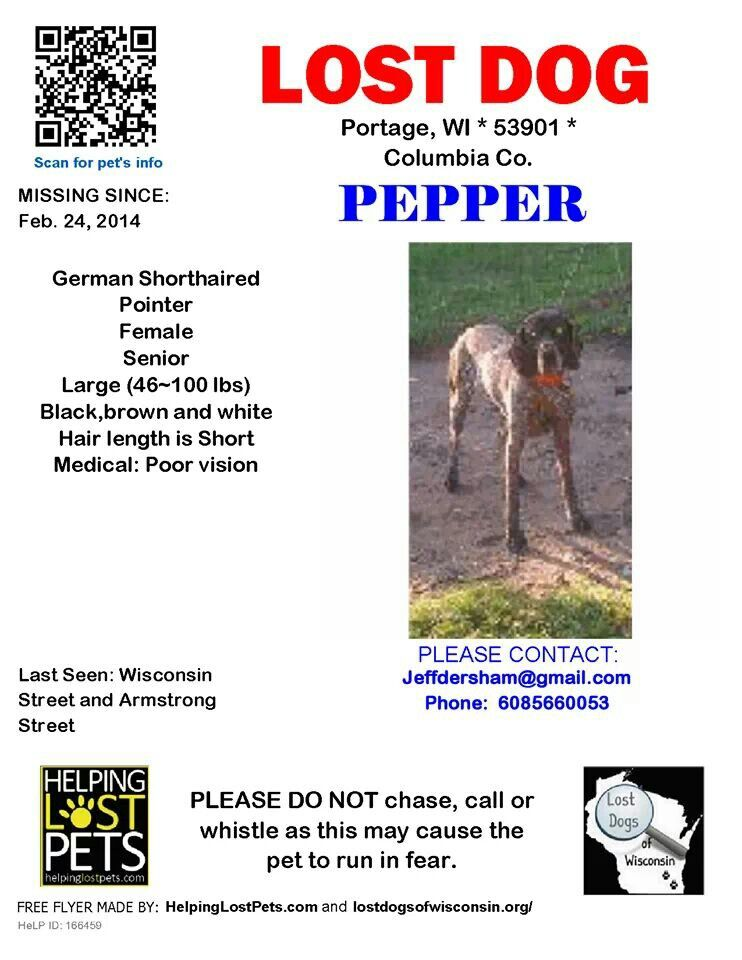 Missing Lost Pet Dog In Wisconsin Named Pepper Losing A