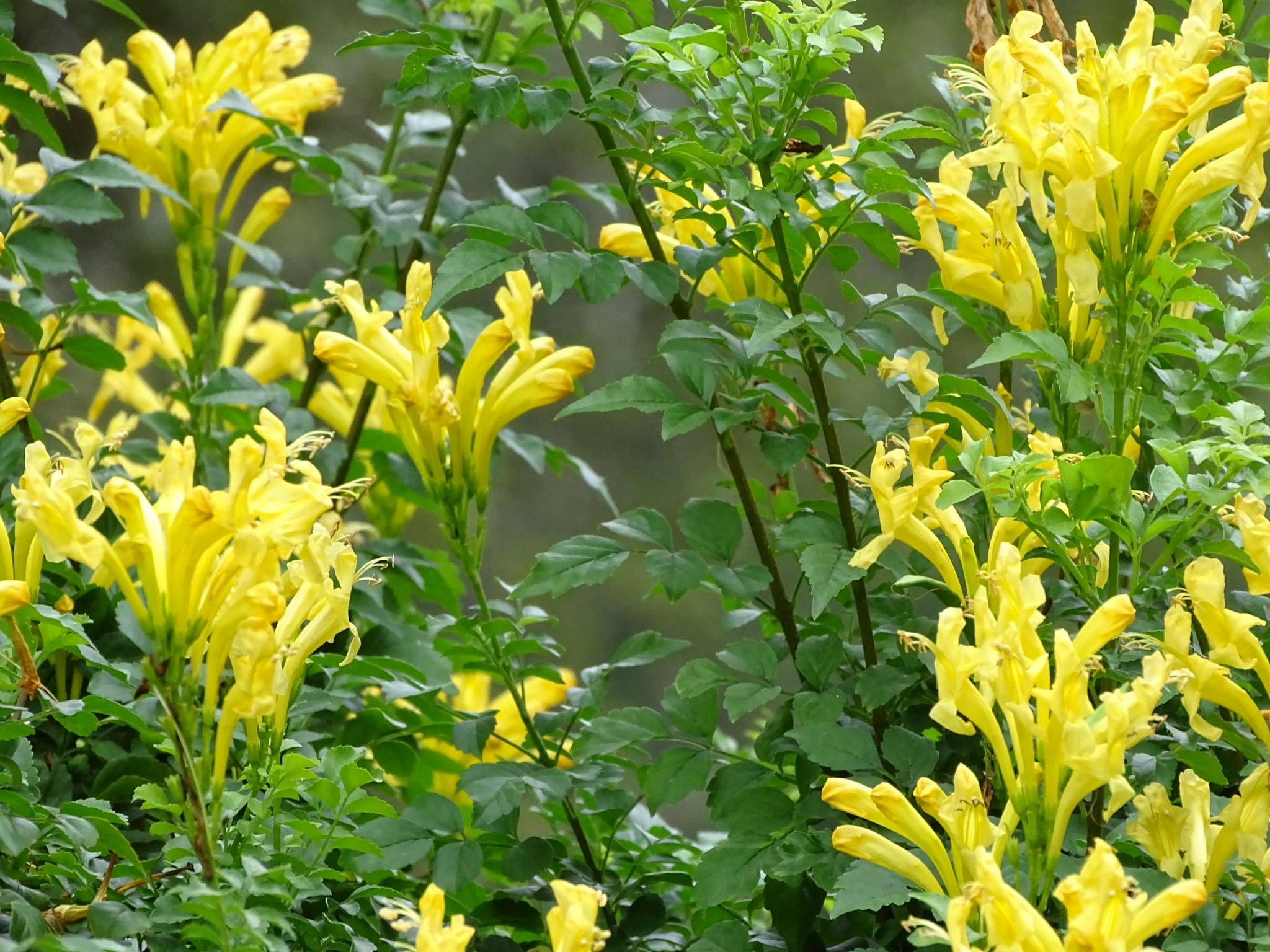 bush with yellow flowers