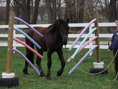 Pool noodle obstacle design horse riding tips horses for Pool design course
