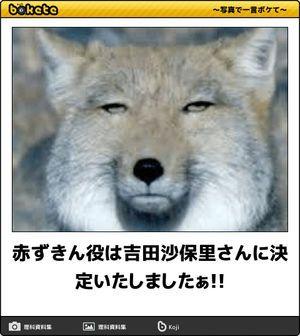 吉田沙保里bokete(ボケて)秀逸ボケ , NAVER まとめ