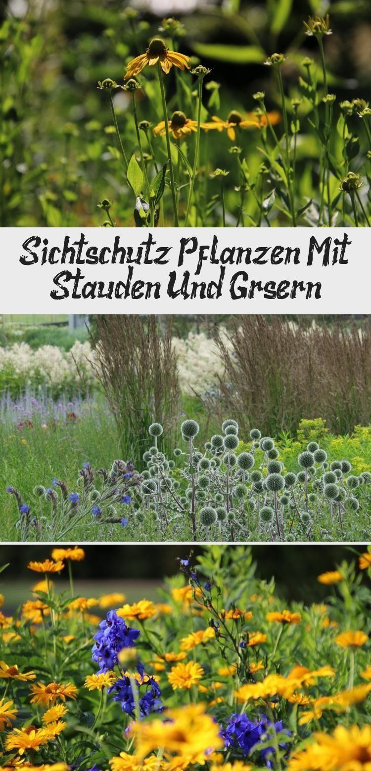 Sichtschutz Pflanzen Mit Stauden Und Grasern Sichtschutzpflanzen