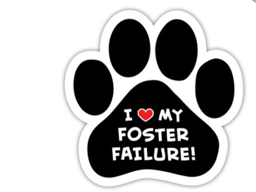 Paw shape car magnet. I love my foster failure