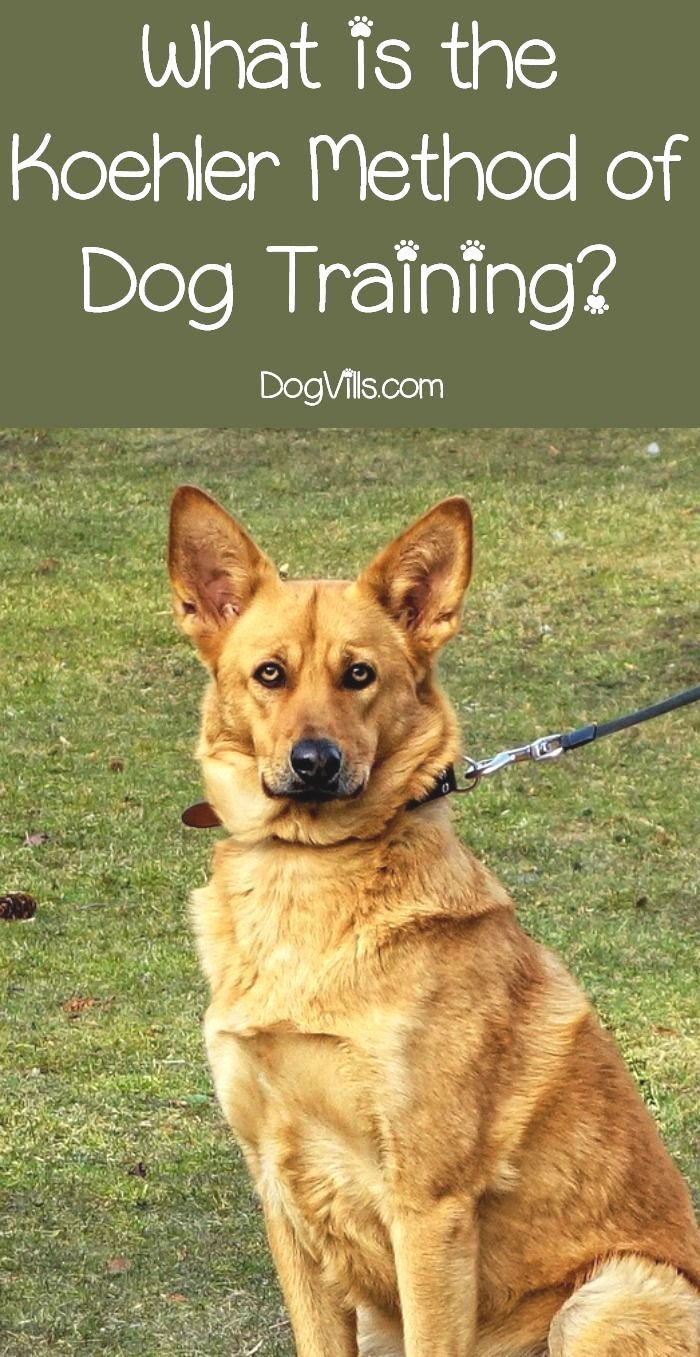 Easiest Dog Breeds To Train Top 12 Listed Here Easiest Dog