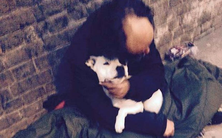 Homeless Man Reunited With Stolen Pet Dog After Internet Campaign Homeless Man Dogs Pet Dogs