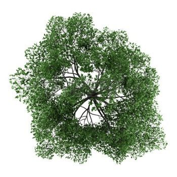 Plants Top View Stock Photos Pictures Royalty Free Plants Top View Images And Stock Photography Trees Top View Tree Photoshop Tree Plan