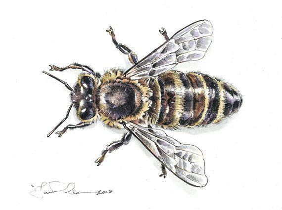 Original Watercolor & Pen Honey Bee Painting, 5 x 4 image ...