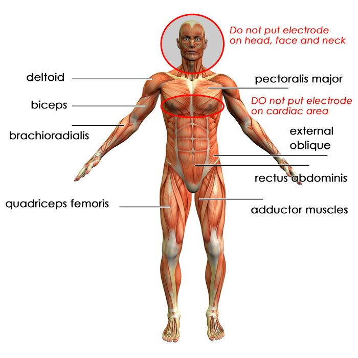 map of muscles in the human body – citybeauty,