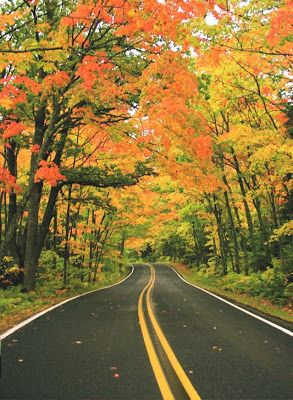 tunnel of trees harbor springs mi ashx 293 400 more of you