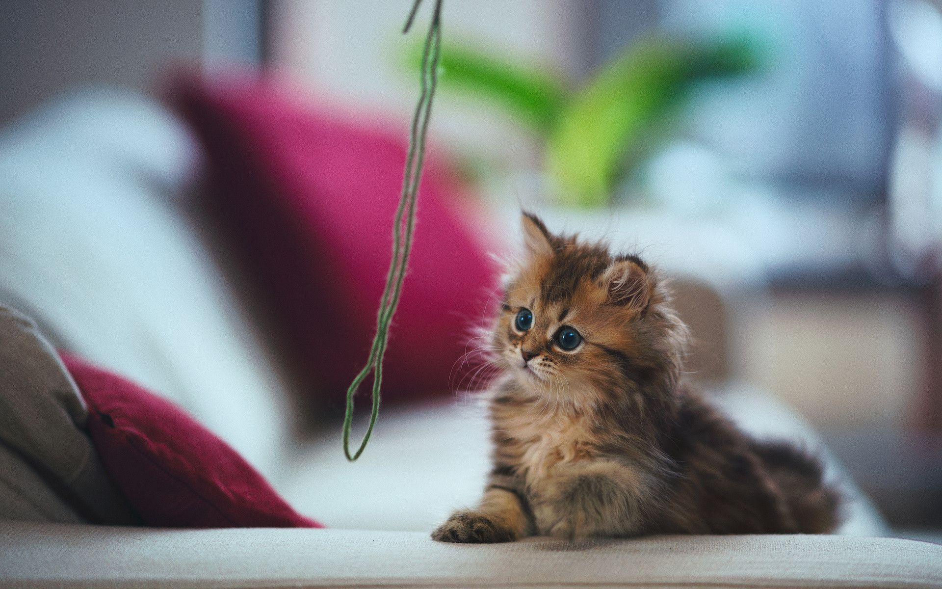 The Cutest Cat In The World Daisy By Ben Torode