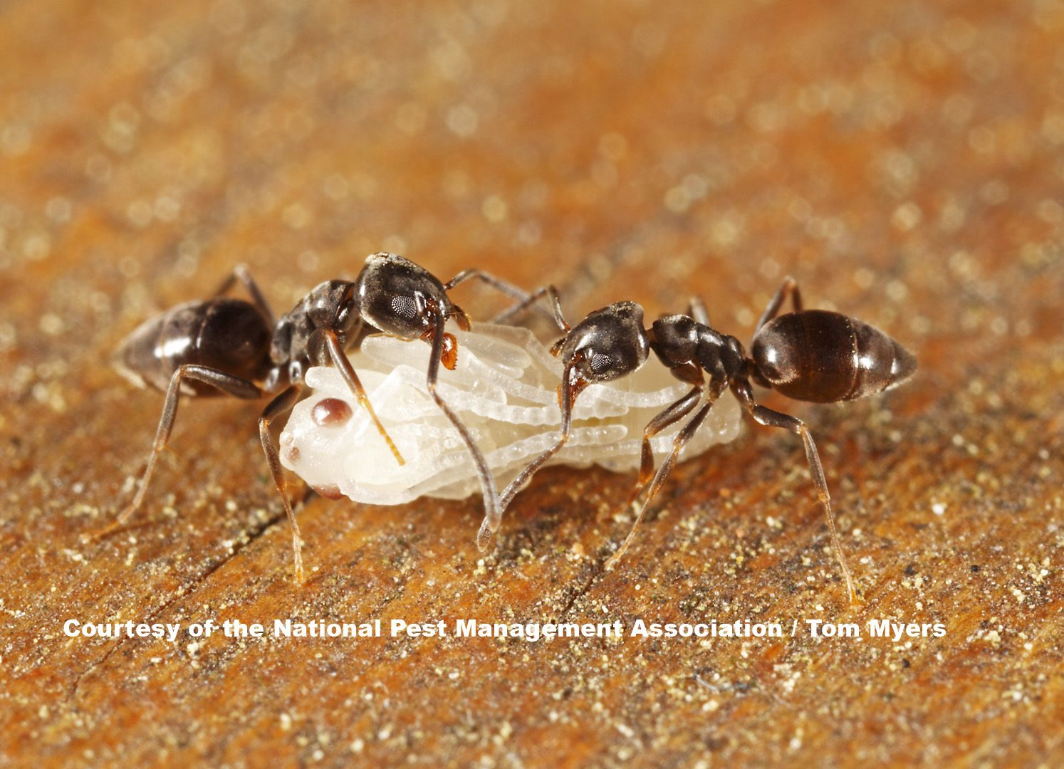 Image Result For Ant Hill Underground Ant Control Pest Control Rid Of Ants