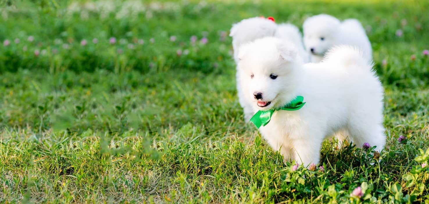 Egyptian Dog Names - Wag! | History | Dog names, Rat terrier