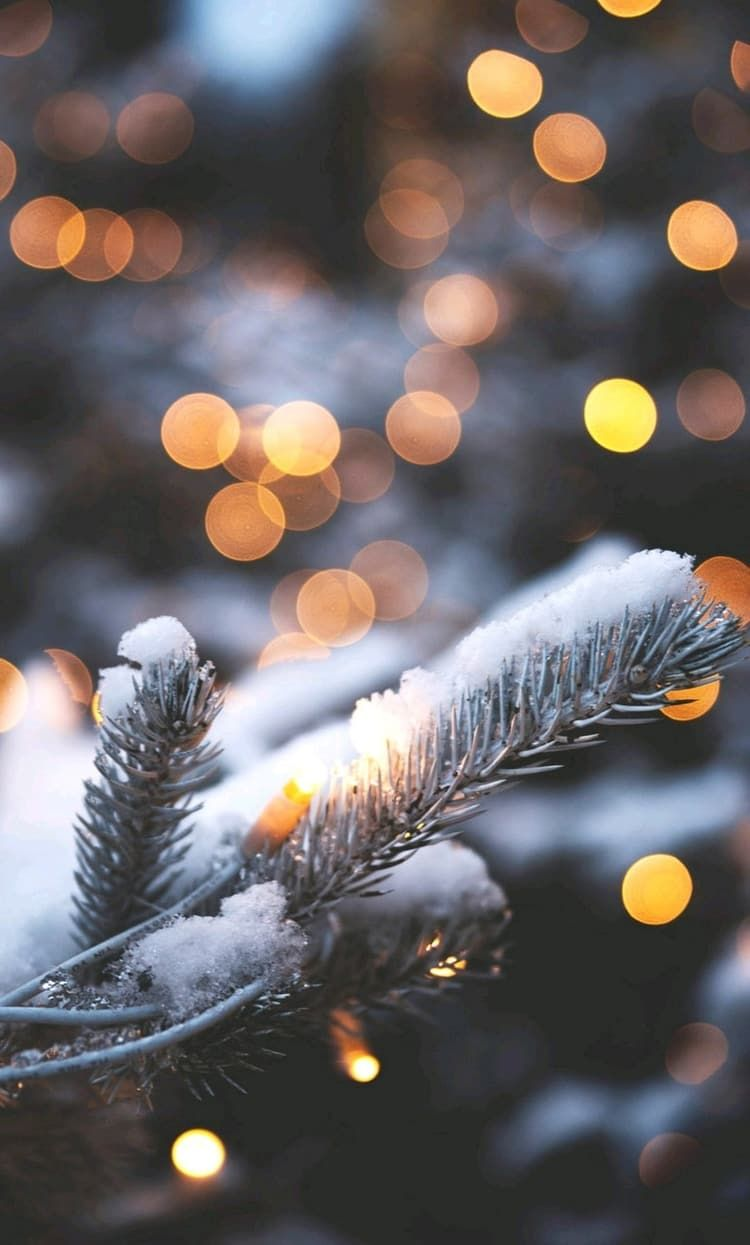 Hair Beauty Nature Nails Tumblr Winter Style Photography Fashion Https Weheartit Com Entry Winter Wallpaper Christmas Aesthetic Christmas Wallpaper