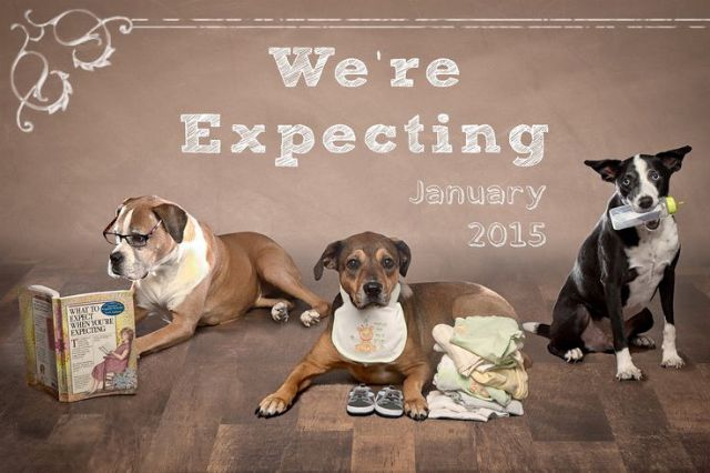 Creative Ways to Include Your Dog in Your Next Big Announcement – Birth Announcement with Dog