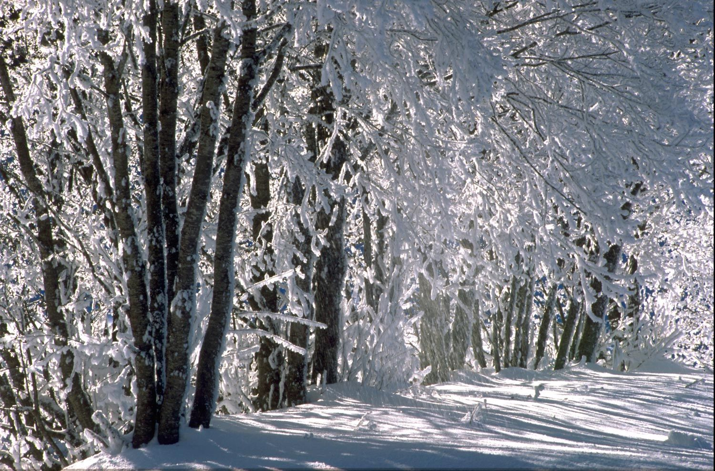 Gratis Ski amad App! | Hauser Kaibling