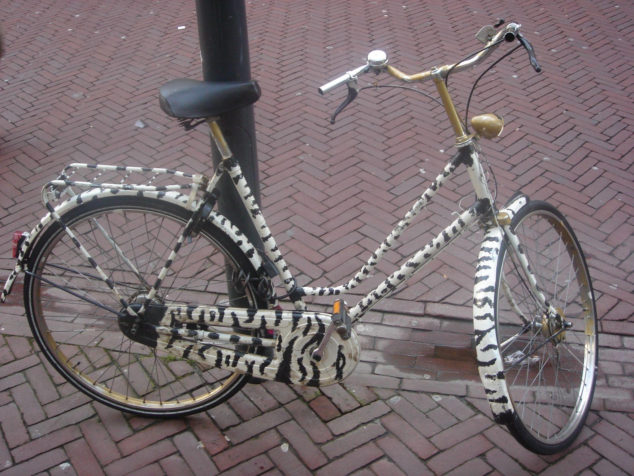 Zebra Bicycle Bicycle Zebra My Pictures