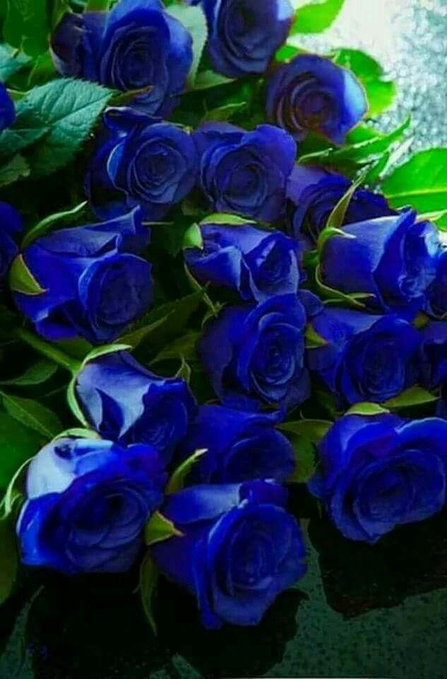 Pin Von Yvonne Fankhanel Auf Blumen Blaue Rosen Blumen Pflanzen