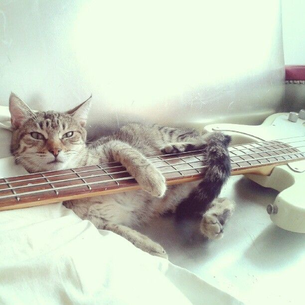 guitarkitty
