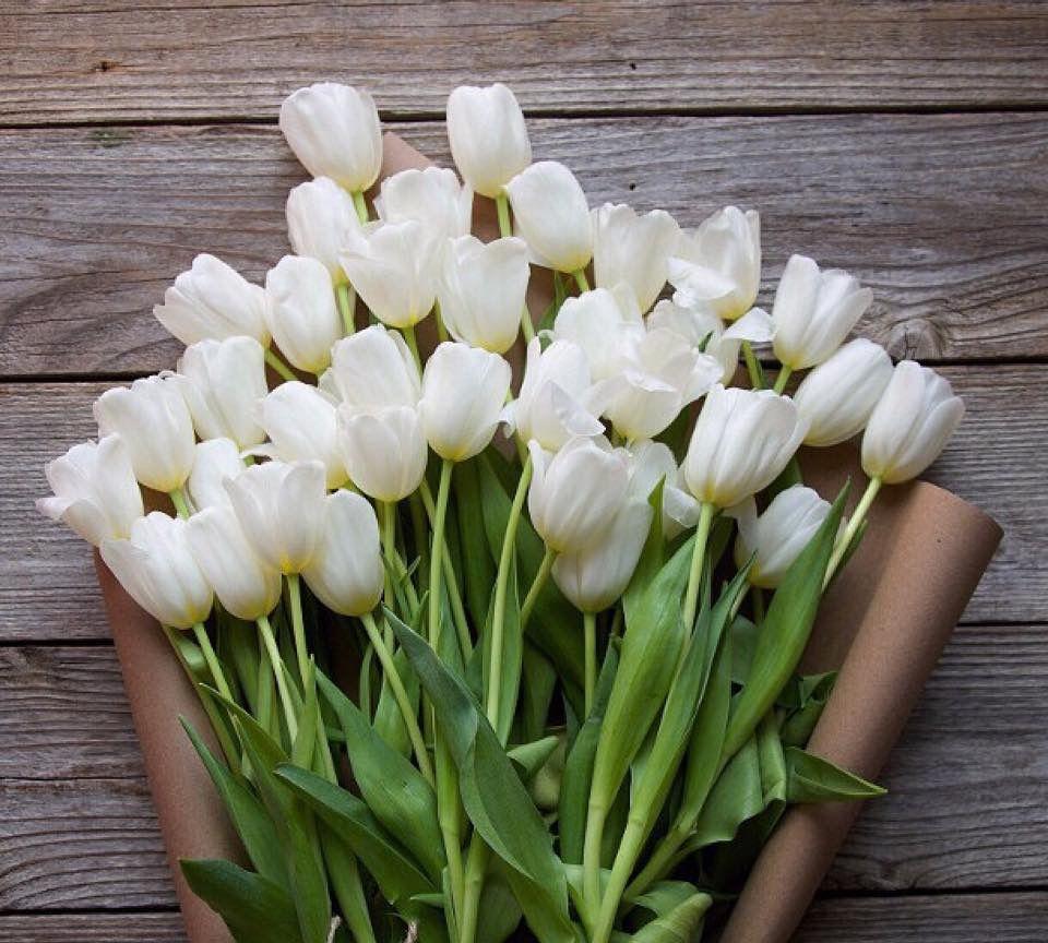 Tulips | Blumen | Pinterest | Flowers, Flower and Plants