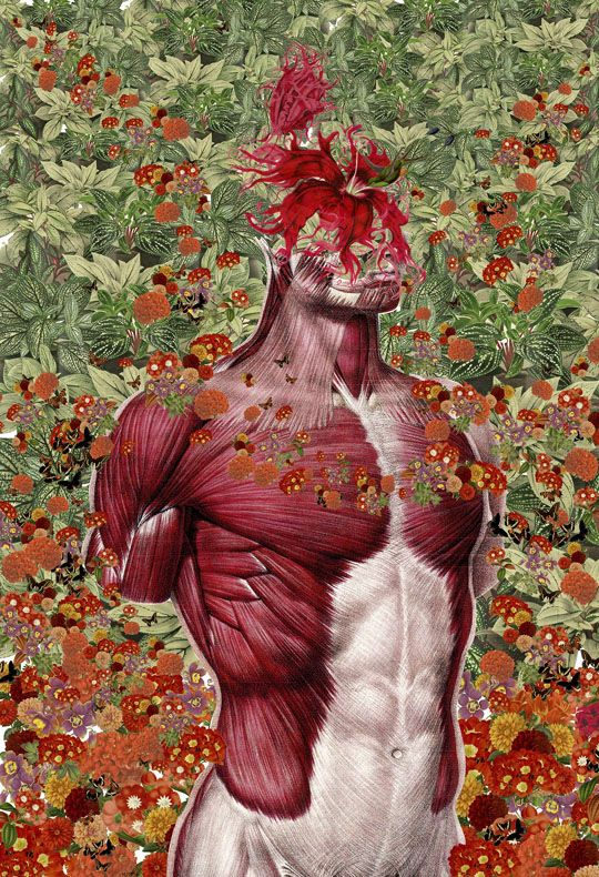 Collages anatómicos Travis Bedel ciencia cuerpo humano | Solo eso ...