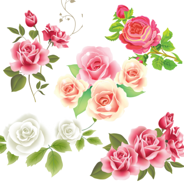Pink White Rose Flower Vector, Pink Rose, Flower, Pattern