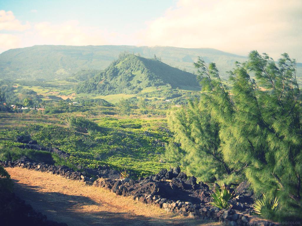 St Joseph Ile De La Reunion The Little Yellow Peaches Ile De La Reunion Vacances Reunion Et Reunion Island